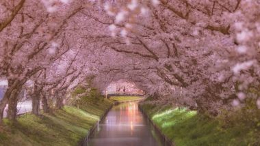 Cherry Blossoms in Japan Turns it Into a Pretty Magical Place Straight Out of a Fairytale!